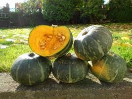 Kabocha squash japanese pumpkin1 thumb200