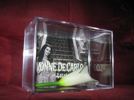The Munsters 'LILY MUNSTER' (inspired Display)*BRAND NEW***MAKE ANY OFFER** - $13.85