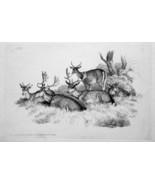 1801 ORIGINAL ETCHING Print by Howitt - DEER Family Rest Hides in High G... - $20.92