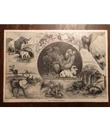 "Vintage Engraving Print of EURASIAN ANIMALS Camel Yak Cobra Unframed 6"" ... - $14.00"