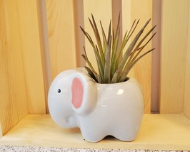 """Air Plant in Animal Planter, 4"""" ceramic, Live Airplant, Emmy the Elephant pot"""