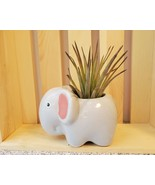 """Air Plant in Animal Planter, 4"""" ceramic, Live Airplant, Emmy the Elephan... - $16.99"""