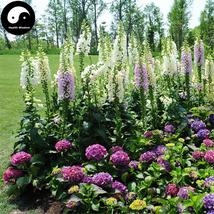 Buy Digitalis Purpurea Flower Seeds 400pcs Plant Flower Digitalis Purpurea - $15.99