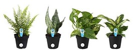 Costa Farms Clean Air - O2 For You Live House Plant Collection 4-Pack, A... - €30,39 EUR