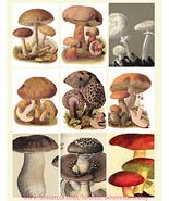 "vintage mushroom fungi plants collage sheet 2.5"" x 3.5"" digital download... - $3.99"