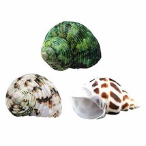 YL Hermit Crab Shells 3PCS Natural Large Hermit Crab Shells 2 Inch ~ 2-1... - $14.22