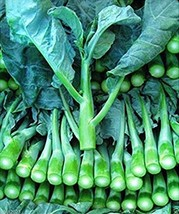 SHIP From US, 25 Seeds Guy Lon Kailaan Seeds, DIY Healthy Vegetable AM - $18.99