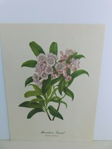 VTG Mountain Laurel  (Kalmia Latifolia)  9x12 Frameable Print Nature Flower - $11.17
