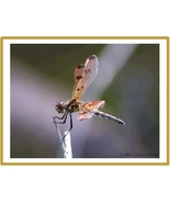 Dragonfly Note Cards Address labels - $9.99