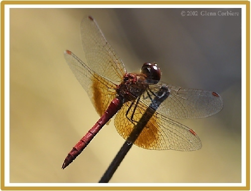 Dragonfly Note Cards Address labels