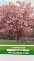 EASTERN REDBUD FLOWERING 4-6 FT  TREE BEAUTIFUL RED FLOWERS  TREES - $96.95