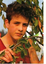 Joey Mcintyre teen magazine pinup clipping New Kids on the block tree branch