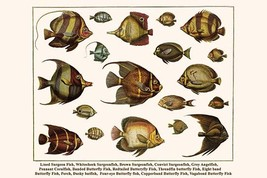 Lined Surgeon Fish, Whitecheek Surgeonfish, Brown Surgeonfish, Convict S... - $19.99+