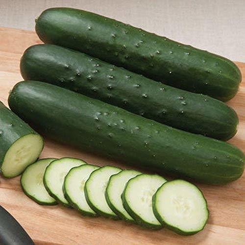 Primary image for Cutter F1 Hybrid Cucumber Seeds (80 Seed Pack)