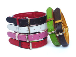 The Paws Fusion Dog / Puppy Leather Dog Collar - All Colours - $8.38+