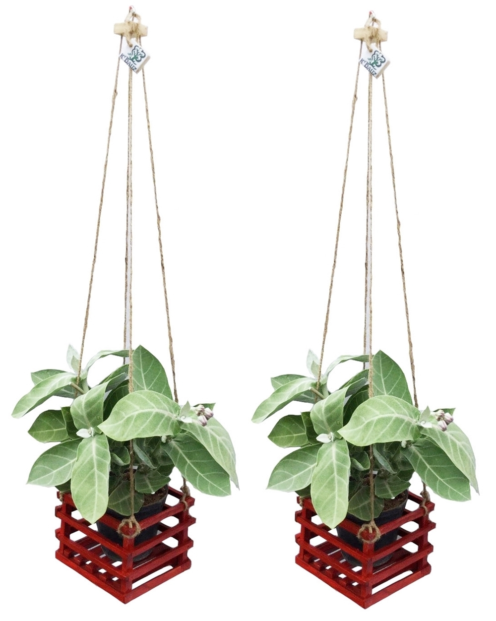 K'DAUZ Set of 2 Hanging Planter Basket Flower Plant Pots Decorative Garden