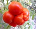 Reisetomate 1r  thumb155 crop