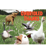 Funny Animal Blank Thank You Greeting Card: Unbridled Thanks - $4.25