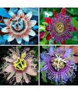 100 Seeds/bag Passion Flower Passiflora incarnata, Certified Pure Live S... - ₹340.64 INR