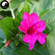 Buy Mirabilis Jalapa Flower Seeds 60pcs Plant Flower Garden Mirabilis Ja... - $5.99