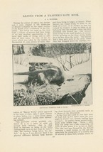 1903 Beaver Study Trapping Kettle River British Columbia Canada Fur Trapper - $10.00
