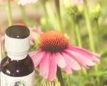 Echinacea_tincture_thumb155_crop