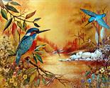 152594 hummingbirds thumb155 crop