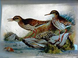 Redshanks (Dufex Foil Print #W6044M) - $4.99