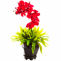 Birds Nest & Orchid Combo With Planter - $53.40