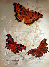Comma Butterfly & Tortoise Shell (Dufex Foil Print #152558) - $4.99