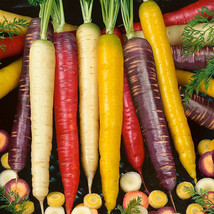 2000 seeds / pack, Mix Carrot Seeds, Six Varieties Fresh Heirloom Organic Vegeta - $14.80