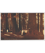 Vintage Postcard People under Big Tree Grove Santa Cruz California K3 - $10.89