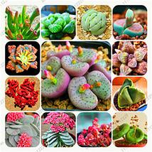 Bonsai flowers indoor fleshier plant, lithops stone flowers seeds, succu... - $4.76