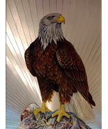 Bald Eagle (Dufex Foil Print #654433) - $4.99