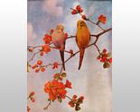 159447 parakeets thumb155 crop