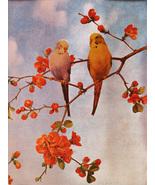 Parakeets (Dufex Foil Print #159447) - $4.99