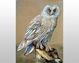 156016 snowy owl thumb155 crop