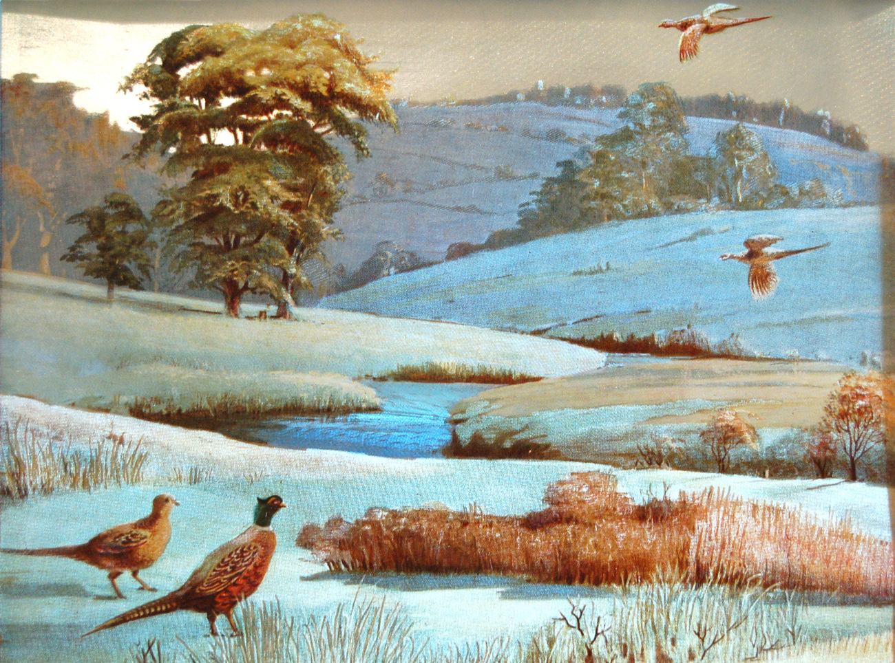 158841 pheasant by stream