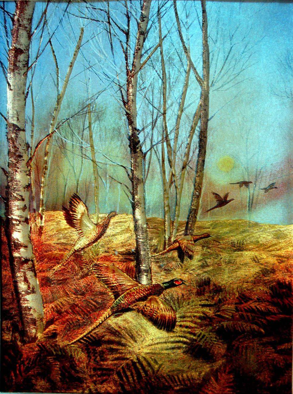 155398 pheasant in white birch