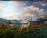 159507 white tail deer in meadow thumb155 crop