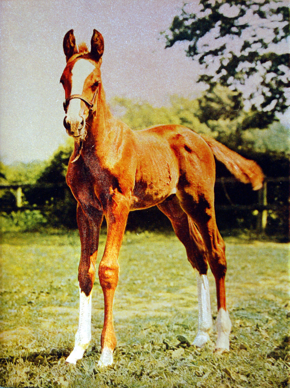 159952 young colt