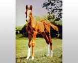 159952 young colt thumb155 crop