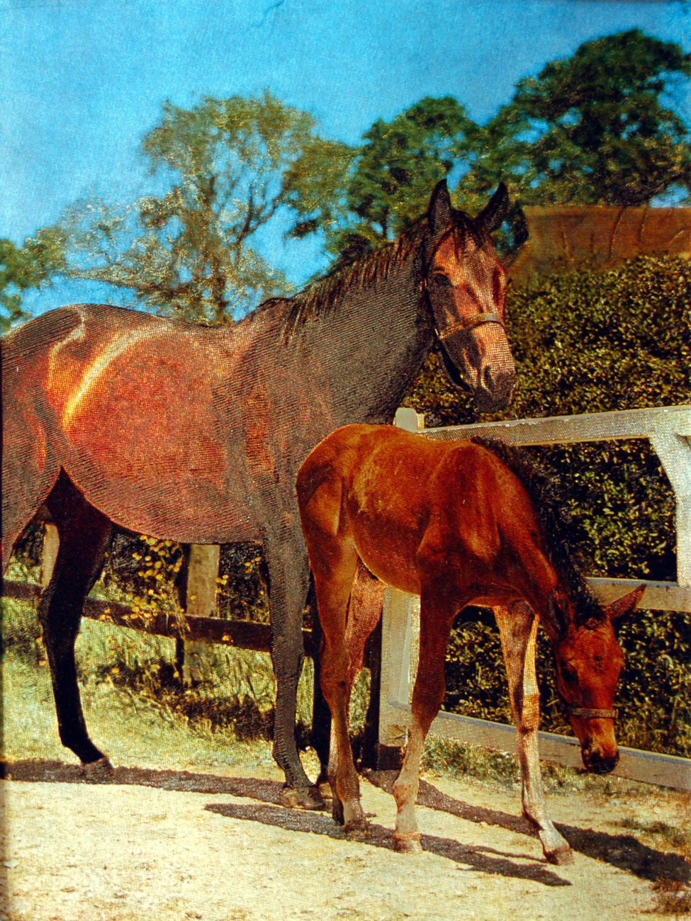 159870 mare with colt