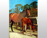 159870 mare with colt thumb155 crop