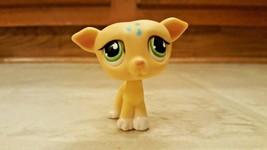 Littlest Pet Shop LPS 875 Yellow Greyhound Whippet Dog Green Eyes Blue R... - $12.00