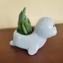 "Ceramic Seal Planter w/ Succulent, live plant, 4"" animal pot, Blue Chalk Sticks image 4"