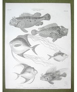 FISHES Scorpion Fish Silverfish African Pompano - 1820 ABRAHAM REES Print - $19.09
