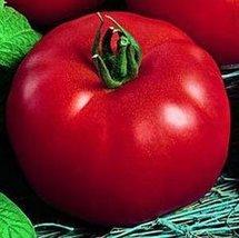 25 Seeds Siberian Tomato - $18.81
