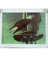 Chester Fields Print Eagle 20in x 24in Signed 185/275 - $88.76