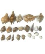 Vtg SEASHELL Lot of 22 COLLECTION Conch Snail WHELK AQUARIUM SEA SHELL A... - $39.59